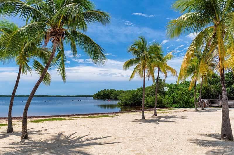 Beautiful Florida sugar sand beach framed by palm trees
