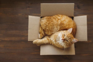 moving-with-your-cat