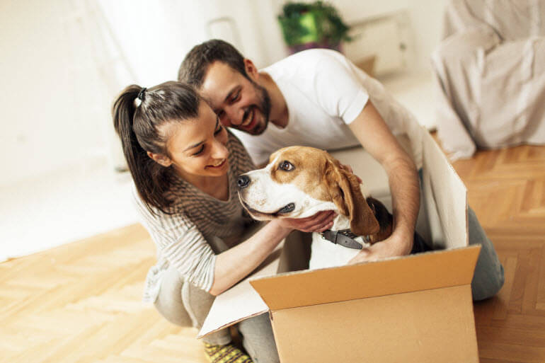 Moving with your Dog this Fathers Day