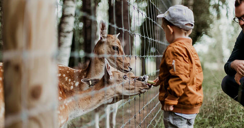 child feeding giraffe at knoxville zoo