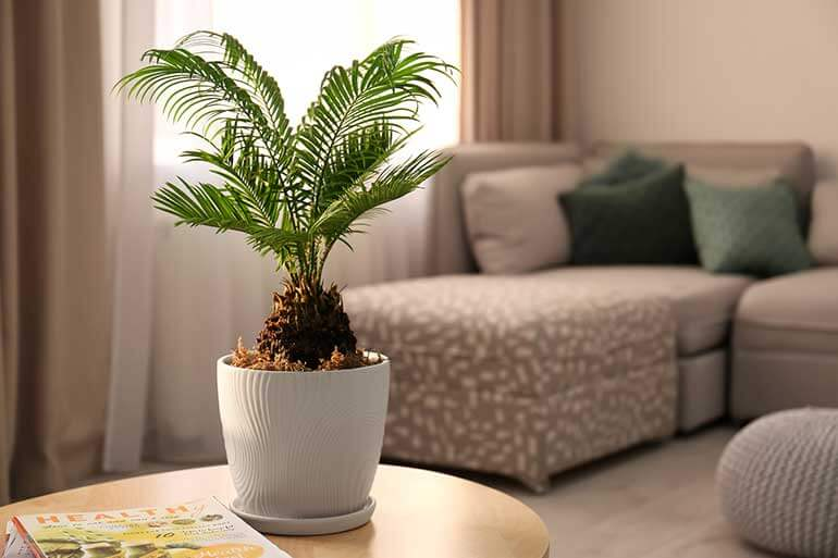 the best air cleaning plants include this potted bamboo houseplant