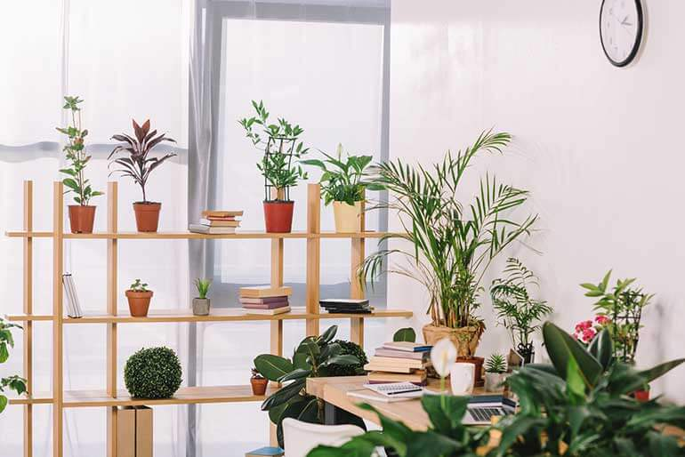 the best air cleaning plants create a healthy home