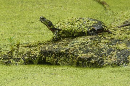 wildlife in Midland TX