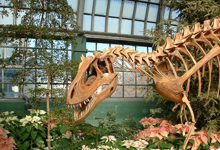 Dinosaur at the Garfield Conservatory in Chicago